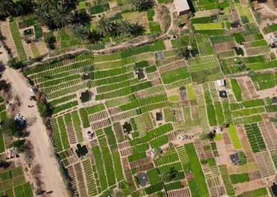 Les jardins maraichers de Dar Naim et Toujounine
