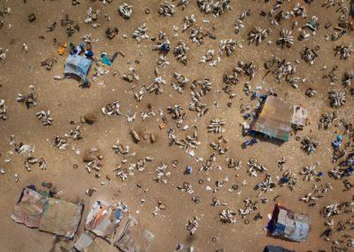 Marché au bétail de Riyad